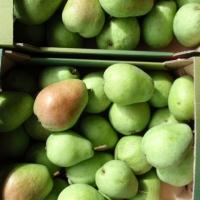 jabłka zielone 3